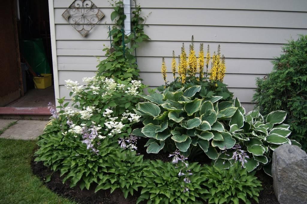 Хосты в саду и на даче: как размножать и ухаживать за растением, ландшафтные хитрости