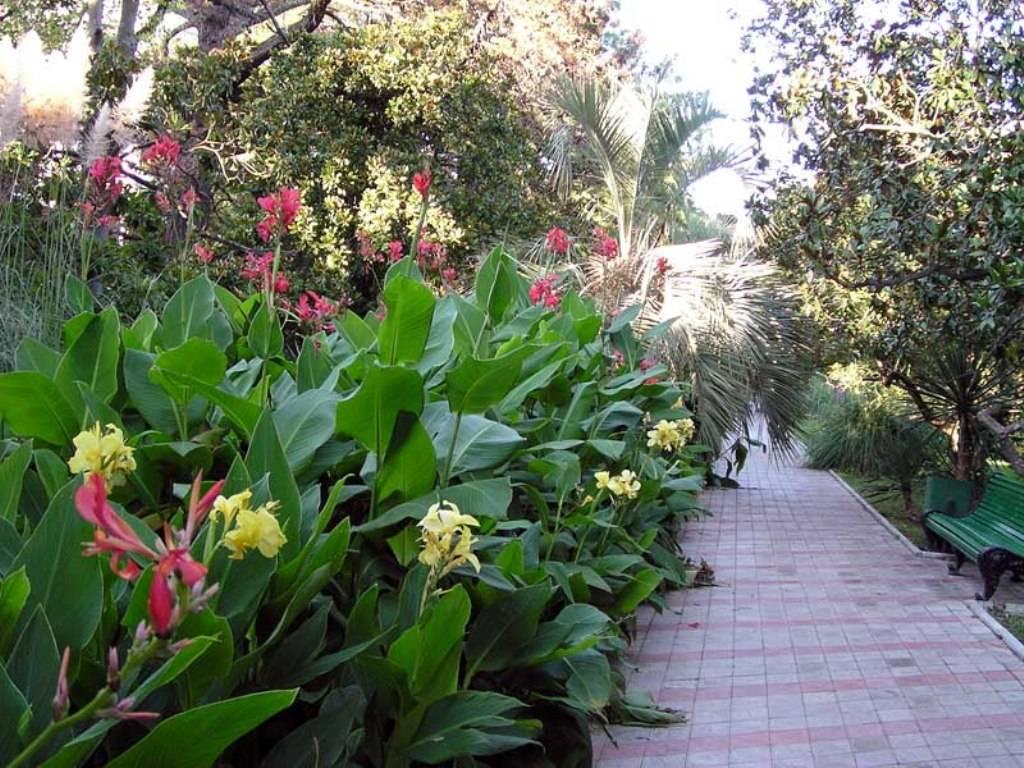 Про цветок канна в ландшафтном дизайне: посадка и уход в саду