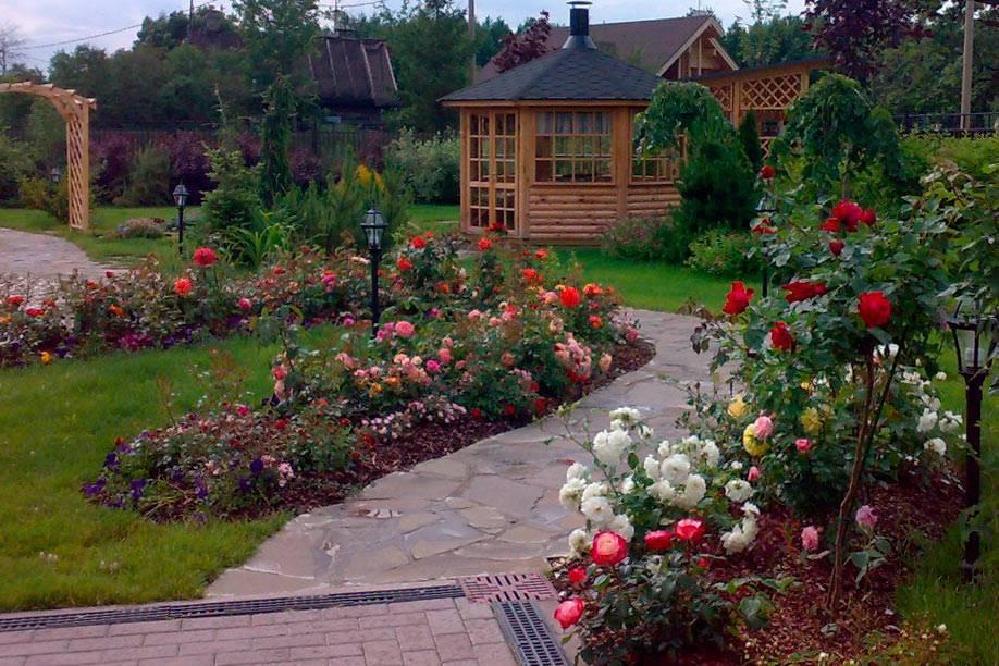 Что такое бордюрные розы и какие сорта являются самыми популярными?