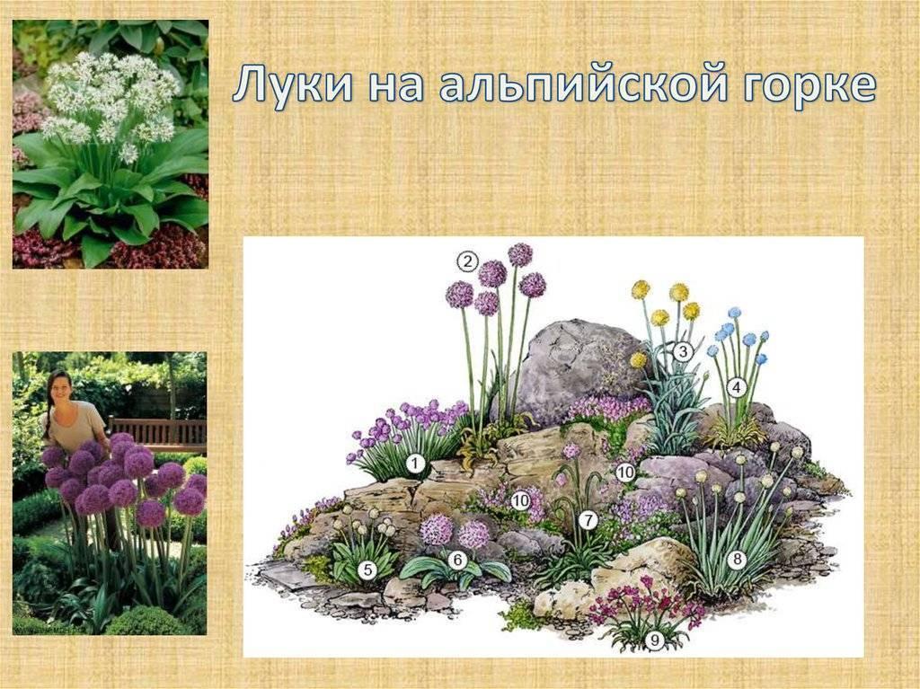 Многолетние растения для альпийских горок: фото, название и описание
