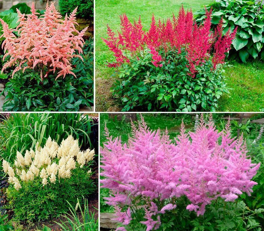 Кусты для ландшафтного дизайна вашего сада: 15 видов с фото и описанием