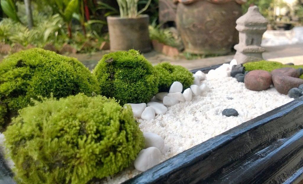 Сад камней своими руками: 3 совета и 5 способов