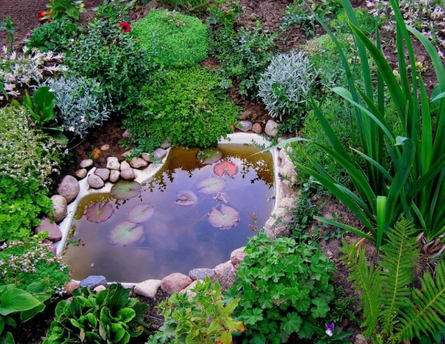 Пруд на даче своими руками (70 фото): ландшафтный дизайн искусственного водоема на участке в саду