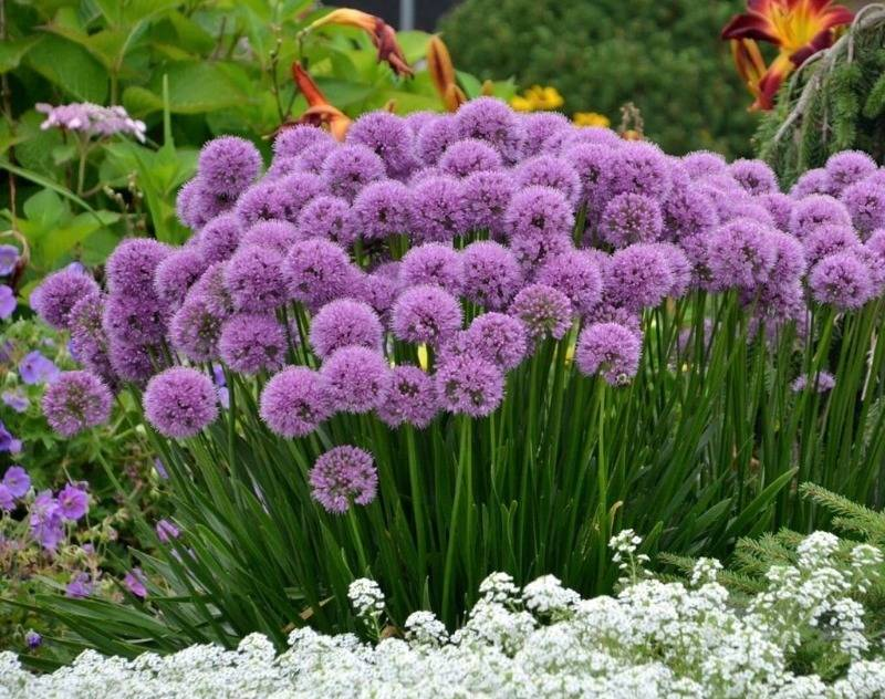 Какие цветы посадить в саду и как