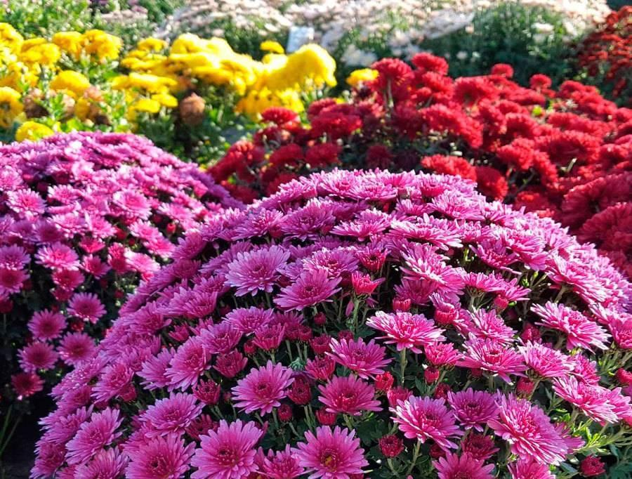 Неприхотливые цветы для сада: фото, описание