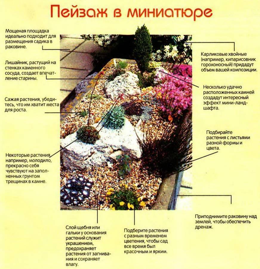 Растения для альпийской горки - особенности выбора, требования к составлению композиций и размещению