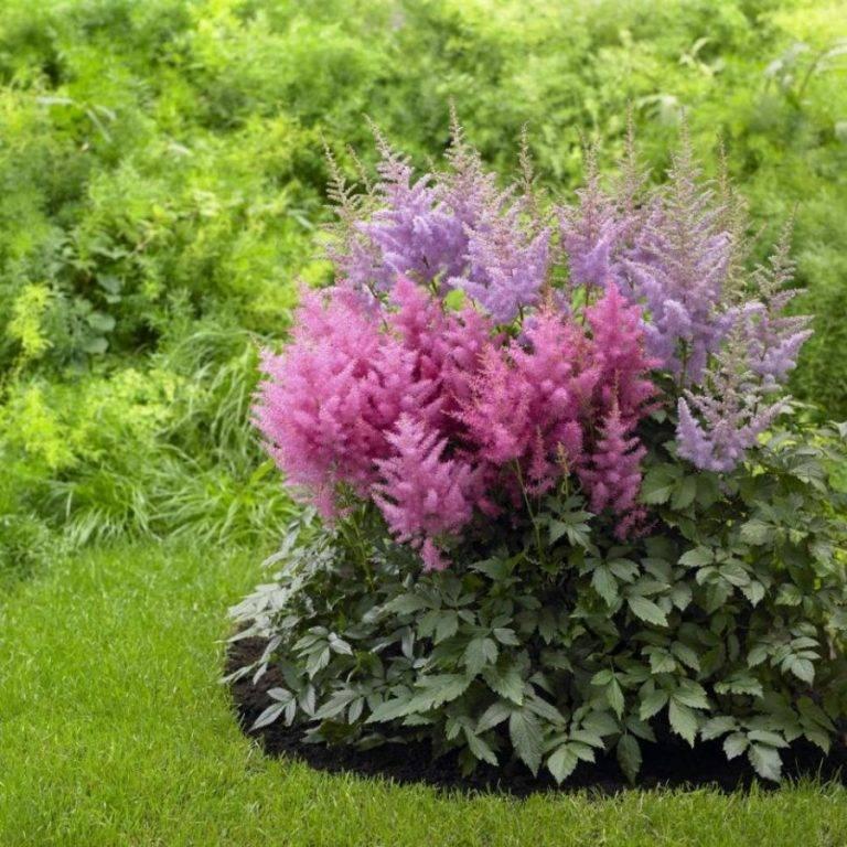 Выбор многолетних неприхотливых растений для сада: лучшие виды и сорта для клумб