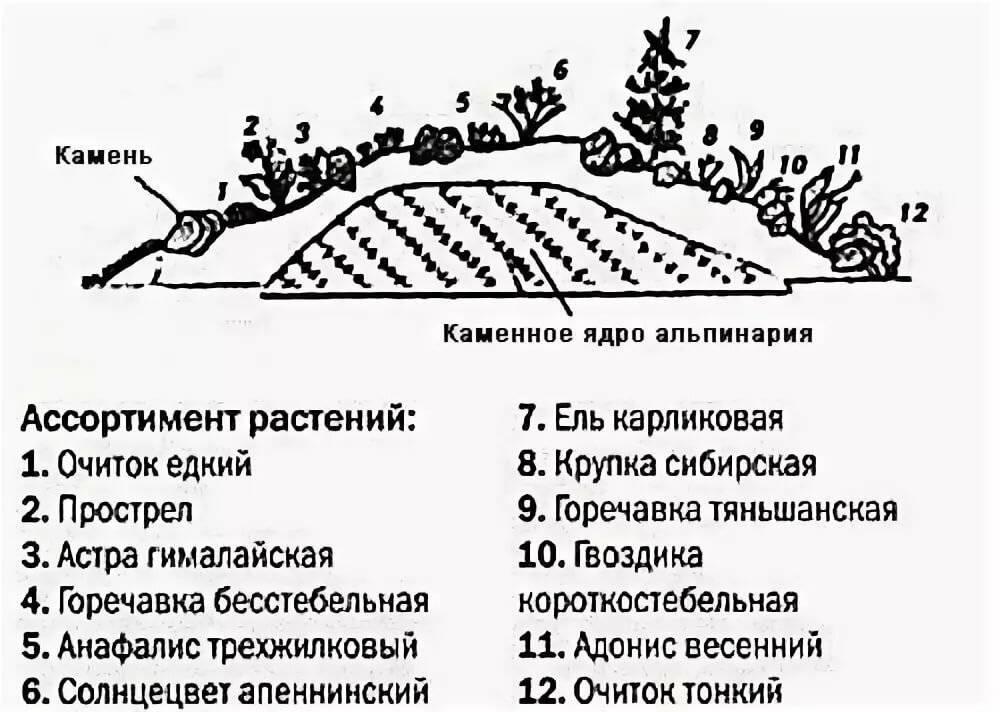 Цветы для альпийской горки: названия и фото, какие лучше выбрать