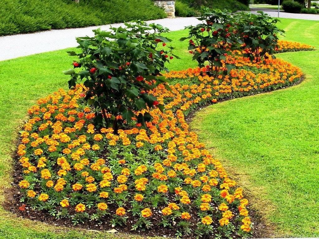 Цветники и клумбы своими руками на даче цветущие все лето (84 фото): низкорослые цветы и их названия, какие лучше посадить однолетние и многолетние виды