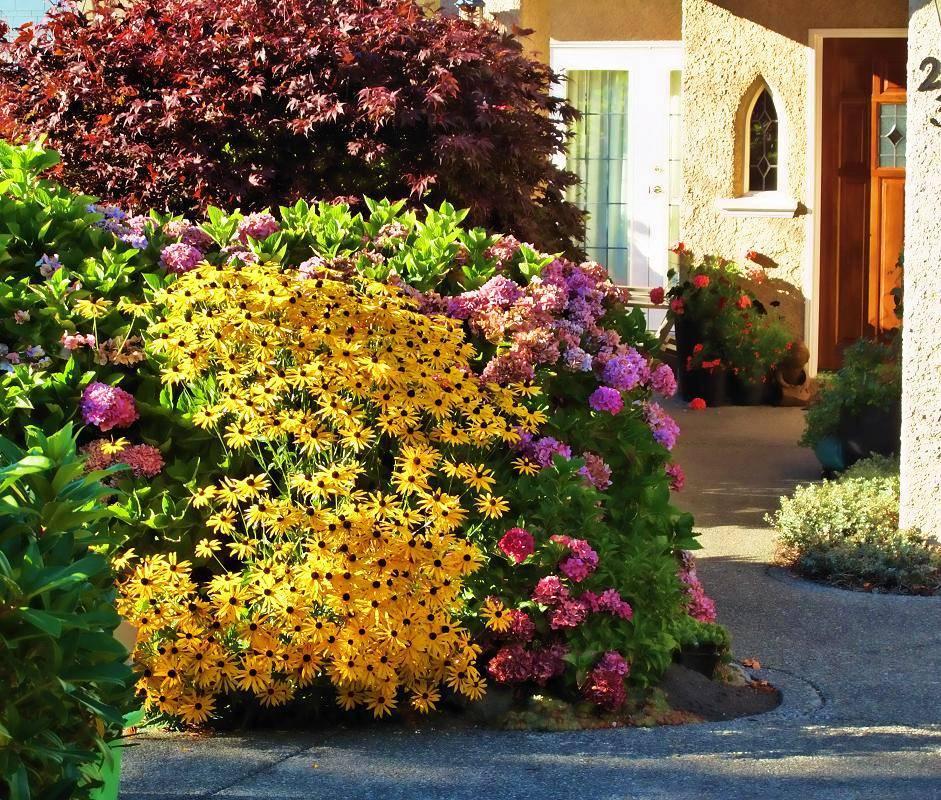 Неприхотливые цветы и растения многолетники для сада