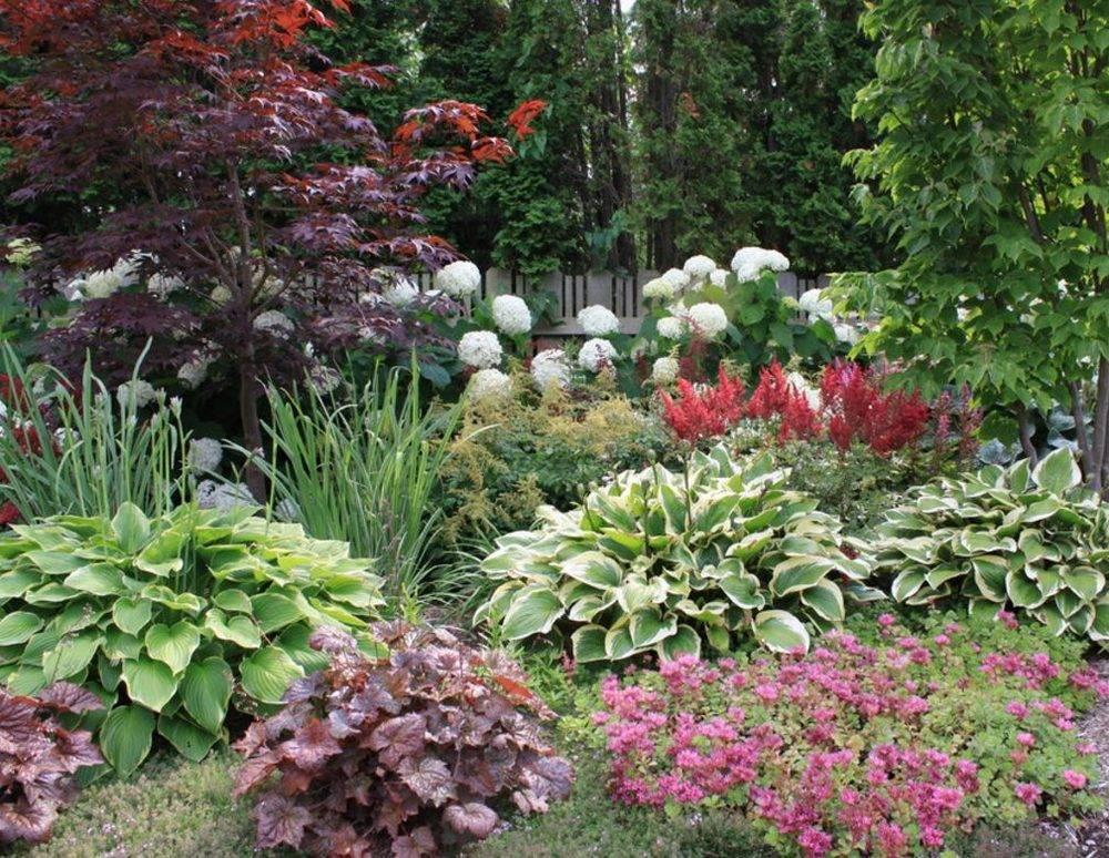 Хосты в саду: ландшафтные хитрости, лучшие соседи + фото оформления участка