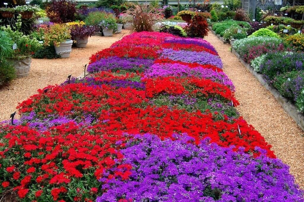Цветы для дачи, многолетние и однолетние - фото примеров