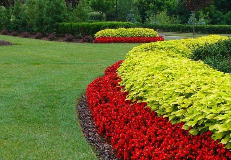 Многолетники цветущие все лето - список лучших многолетних растений