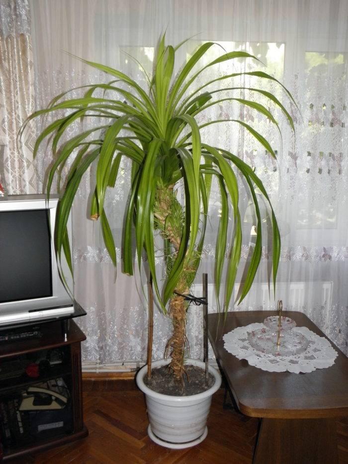 Пальмовые
