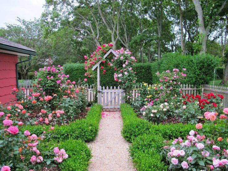 Почвопокровные розы в ландшафтном дизайне: посадка, уход, лучшие сорта