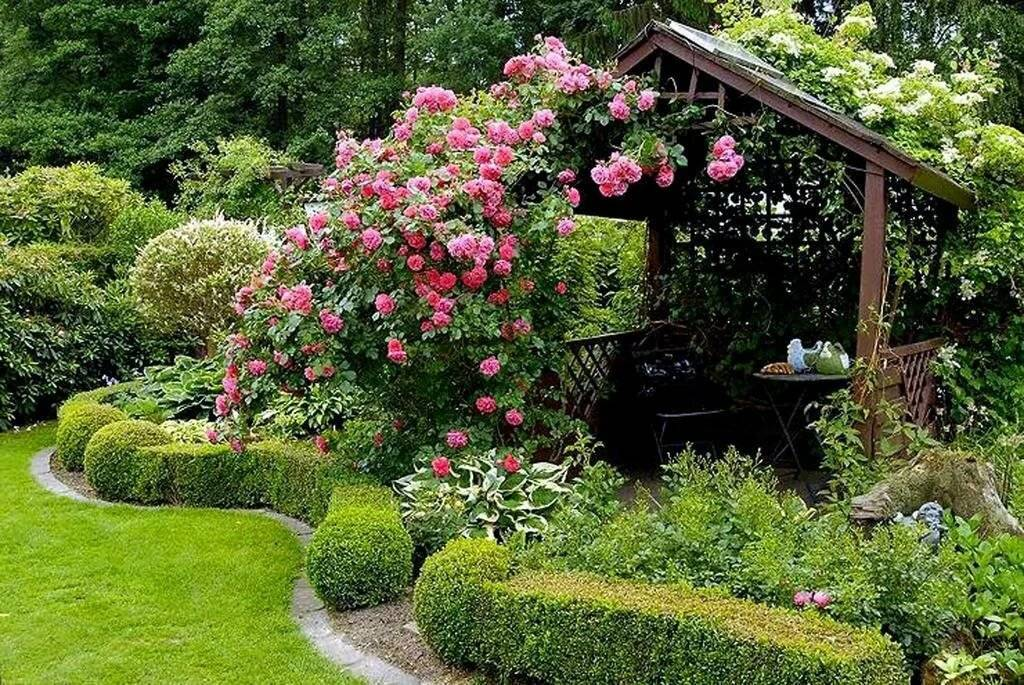 Как вырастить розы в своем саду - краткая энциклопедия (170 фото)