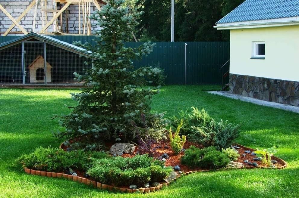 Хвойники в ландшафтном дизайне – советы по оформлению сада