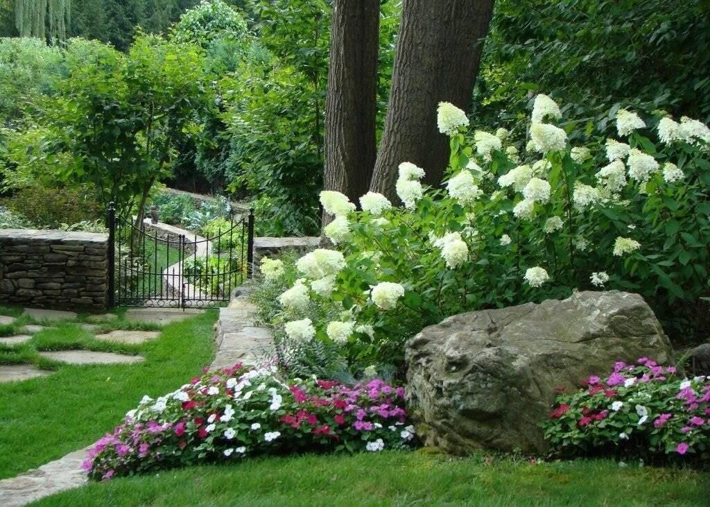 Какие розы используют в ландшафтном дизайне