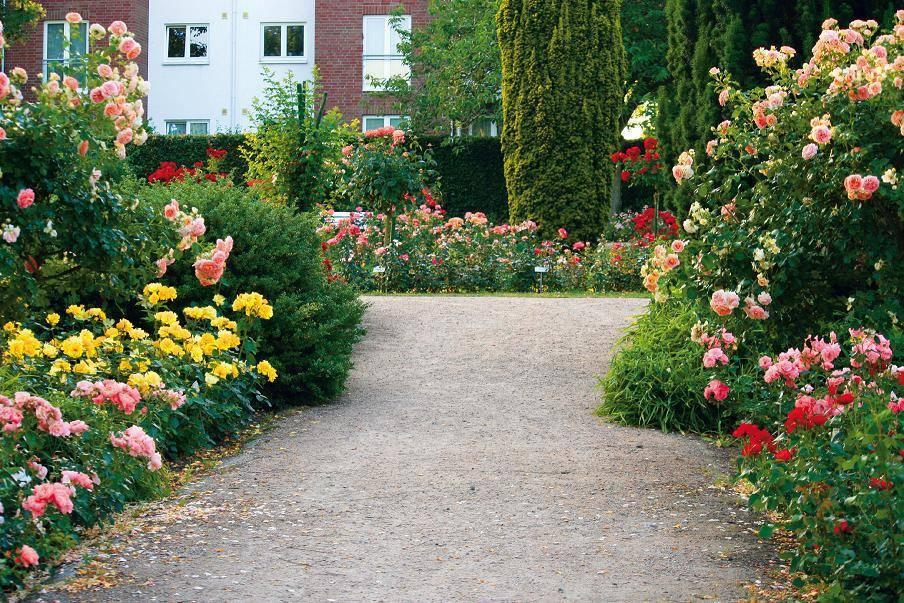 Ландшафтный дизайн розария: инструкции по созданию
