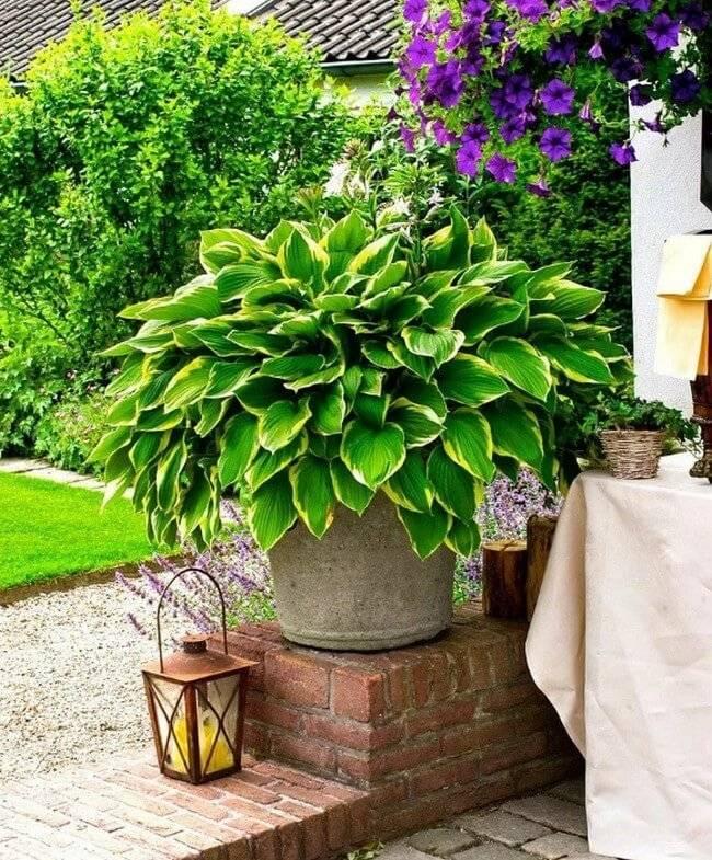 Способы использования различных растений для ландшафтного дизайна