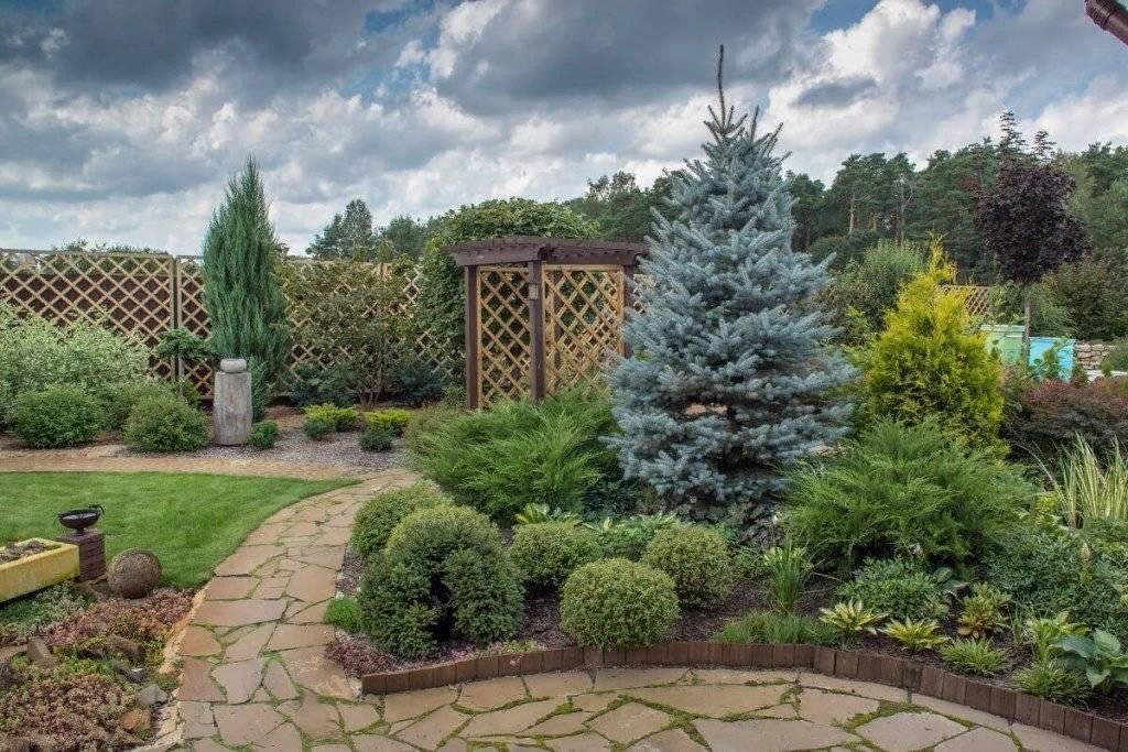 Хвойные в ландшафтном дизайне дачного участка   красивый дом и сад