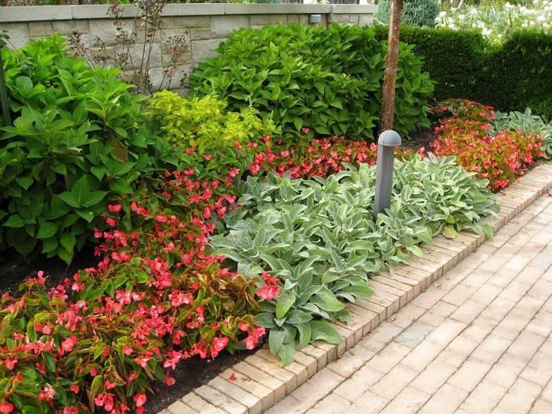 Бальзамин садовый посадка и уход выращивание из семян в домашних условиях