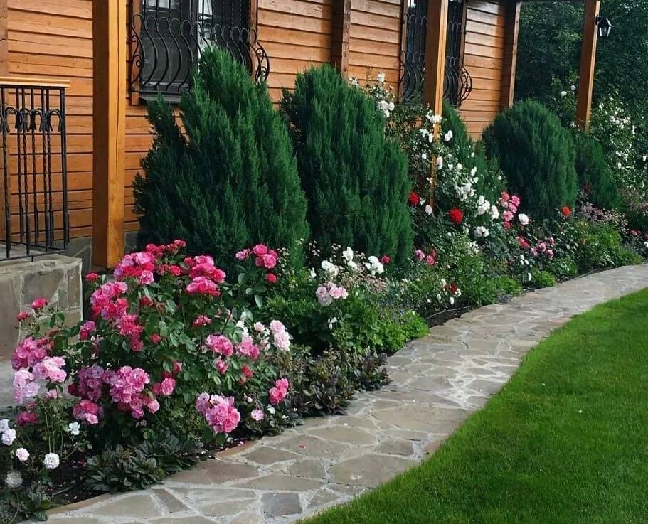 Розы в ландшафтном дизайне сада или дачного участка