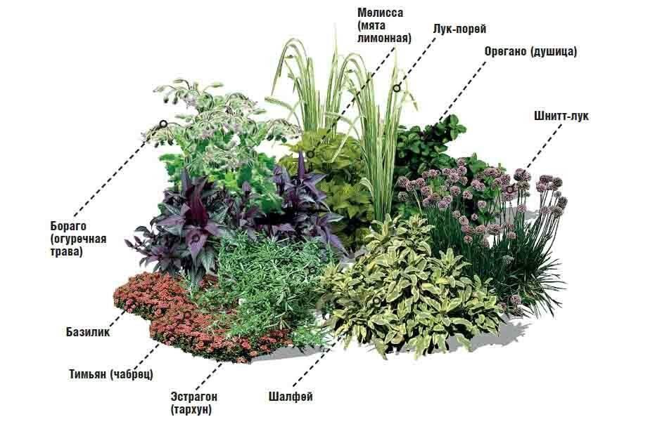 Растения для альпийской горки: названия и фото, озеленение своими руками