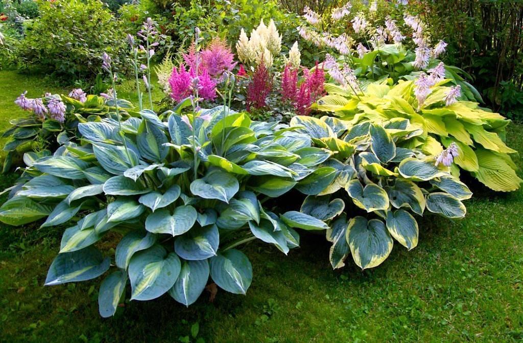 Растения в ландшафтном дизайне: правила оформления сада
