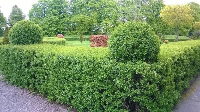 Живая изгородь: ее функции, виды, используемые растения, правила посадки, уход
