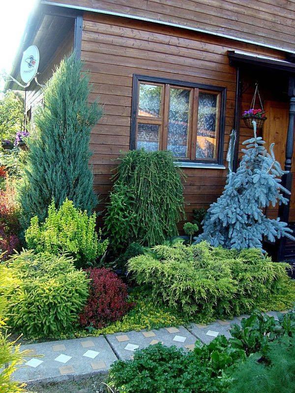 Использование хвойных растений в ландшафтном дизайне: интересные идеи