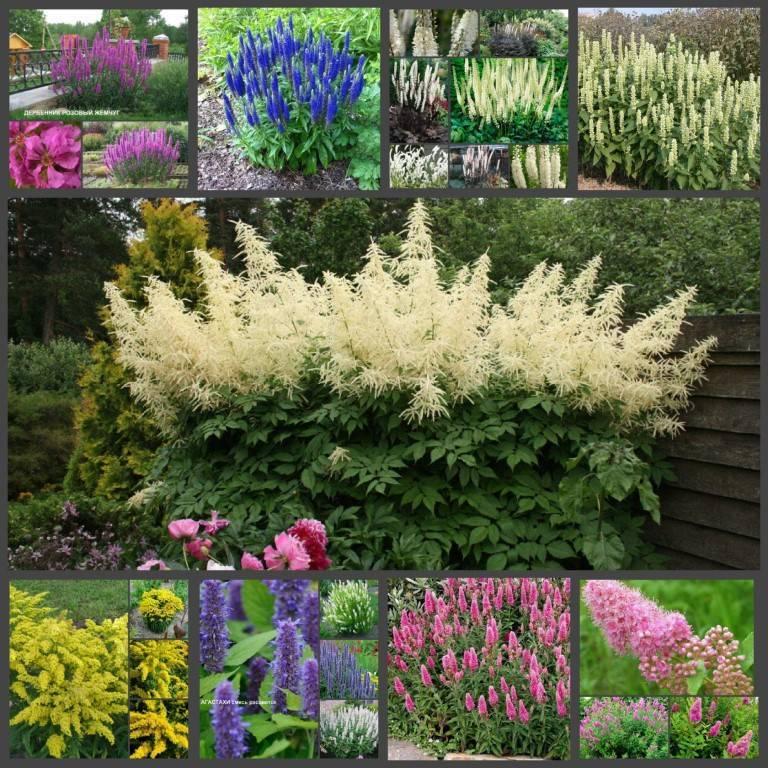 Кустарники цветущие всё лето - красивые, декоративные, многолетние для сада