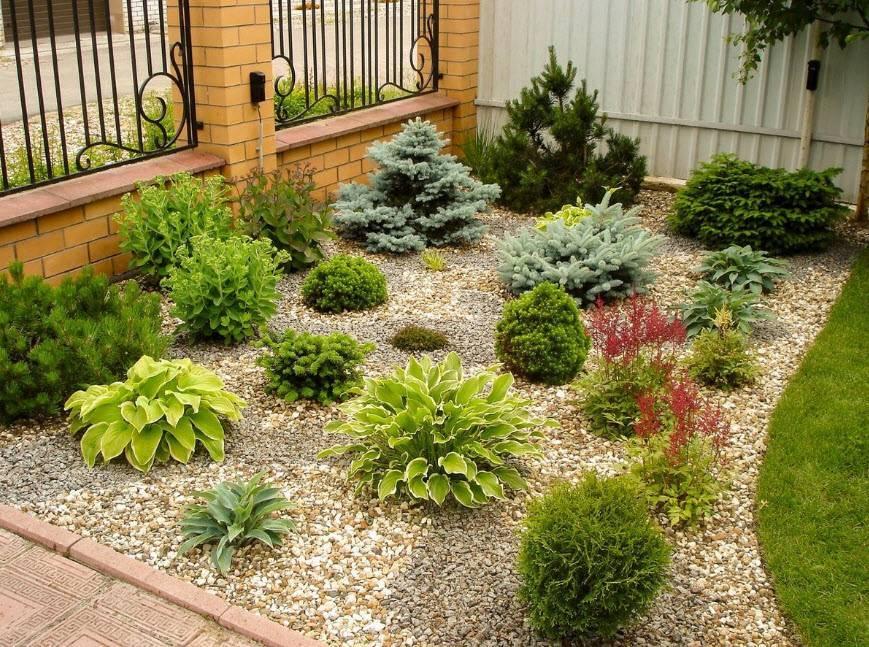 Хвойные в дизайне сада, фото композиций и рекомендации