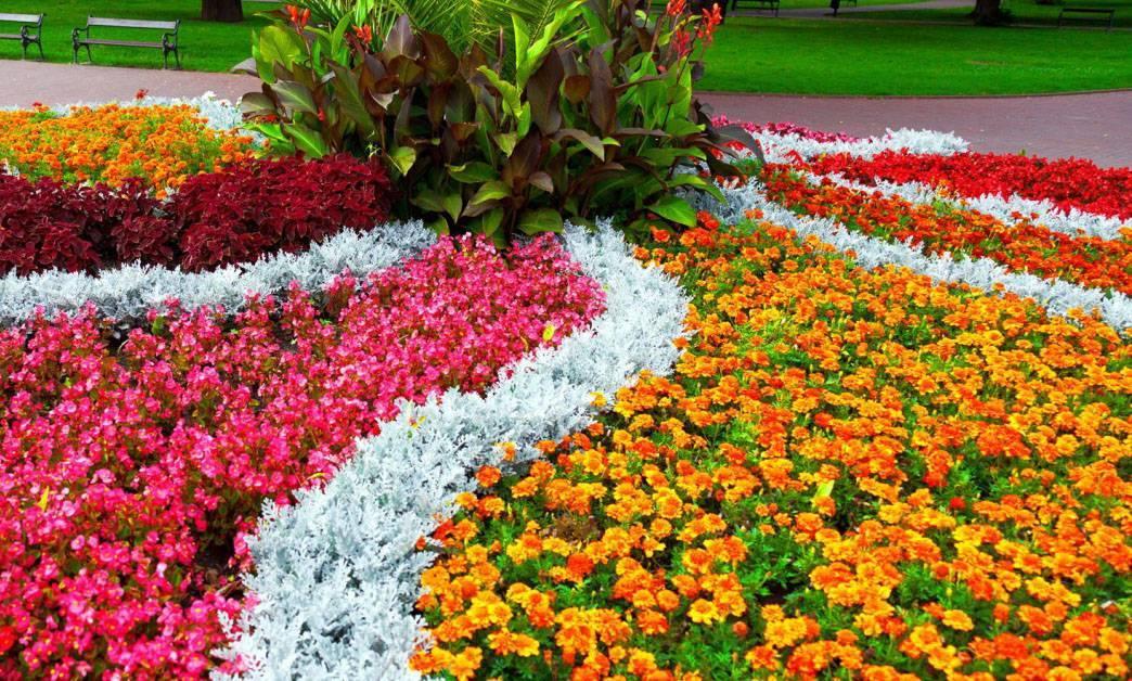 Садовая бегония: описание, уход и размножение цветка