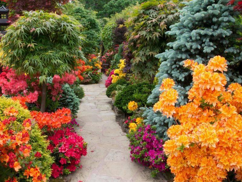 Лучшие кустарники цветущие всё лето