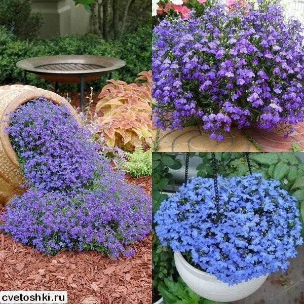 Однолетние цветы – выбираем неприхотливые виды для дачного участка