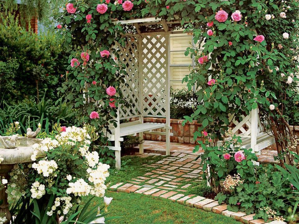 Красивый розарий на даче — пошаговая инструкция с фото примерами оформления розария в саду!
