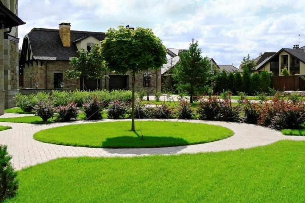 Как сделать газон своими руками: особенности укладки  (51 фото): какую траву для ландшафтного дизайна посадить на даче своими руками