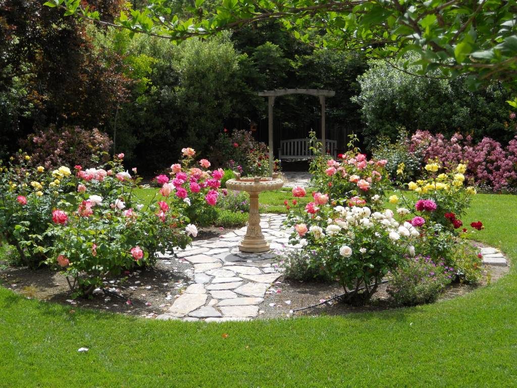 Розы в саду: ландшафтный дизайн дачного участка, фото композиций