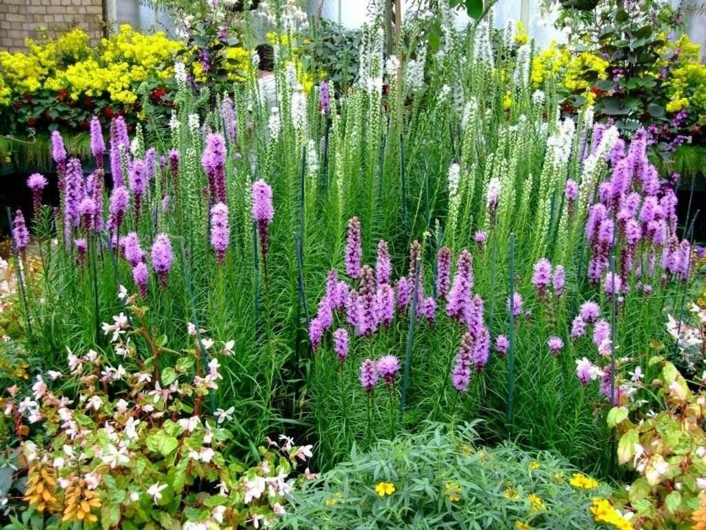 Растения для ландшафтного дизайна: виды, особенности посадки и ухода