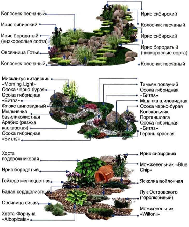 Растения для альпийской горки и рокария: 10 принципов и 30 фото