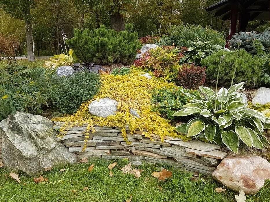 Альпийская горка своими руками: схемы, варианты высадки растений и место на участке – свой дом мечты