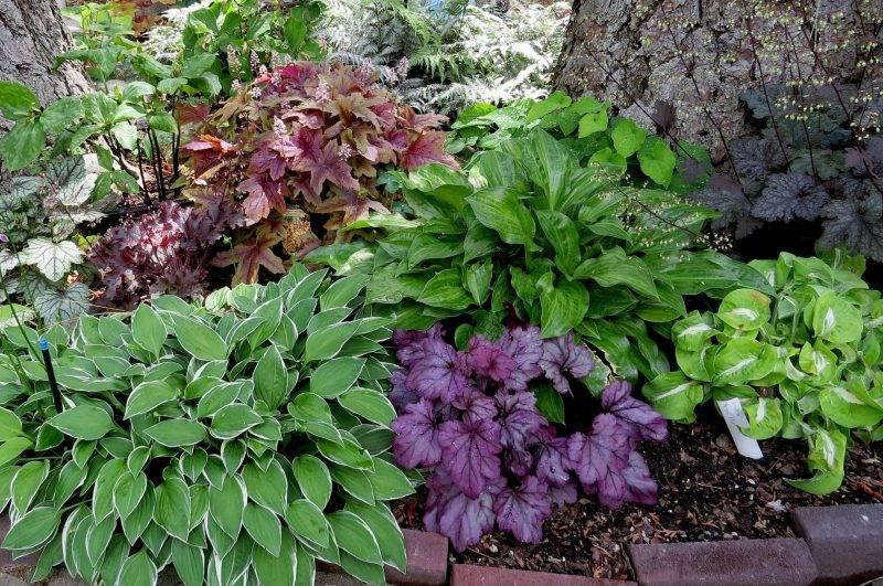 Буйство зелени в вашем саду: фото-идеи использования хост в ландшафтном дизайне