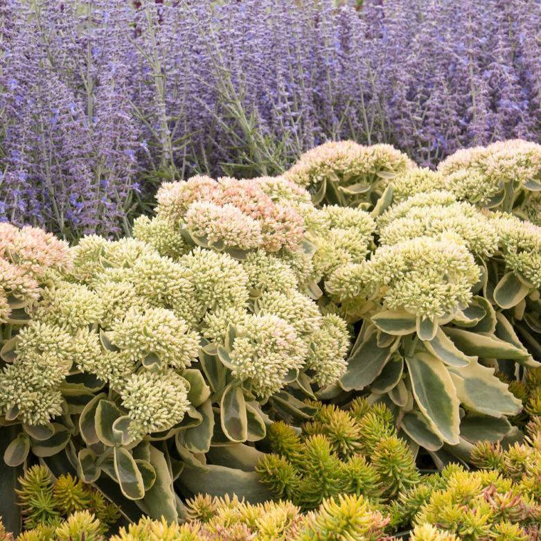Растения и цветы для ландшафтного дизайна с названиями  - 30 фото
