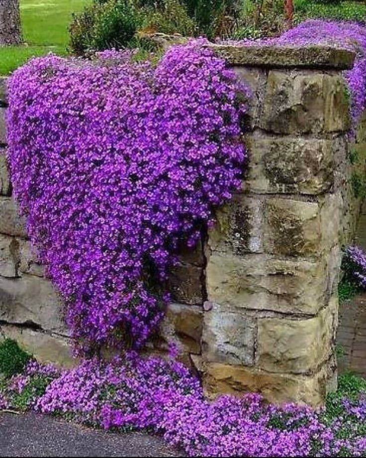 Самые привлекательные и неприхотливые многолетние растения для сада и дачного участка