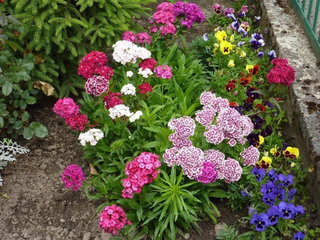 Неприхотливые долгоцветущие цветы многолетники и однолетники для сада и дачи: обзор растений с фото