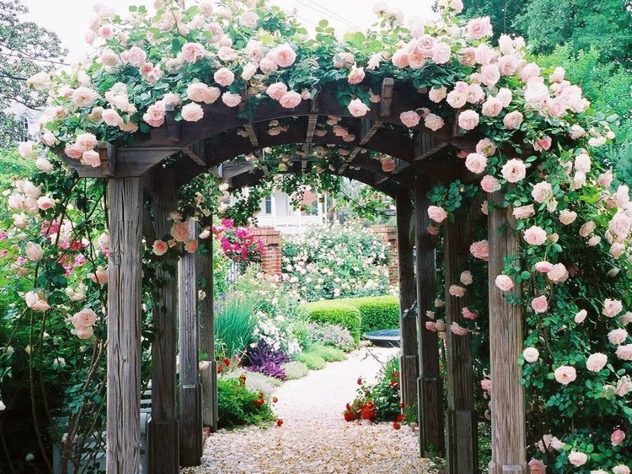 Садовые арки: расположение в саду, оформление, виды садовых арок