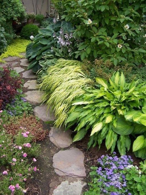 Хоста в ландшафтном дизайне в саду: как посадить хосты красиво, клумбы с хостой
