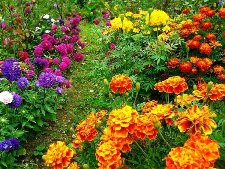 Неприхотливые цветы для клумбы цветущие все лето. хороши и в клумбе, и в вазоне и на балконе!