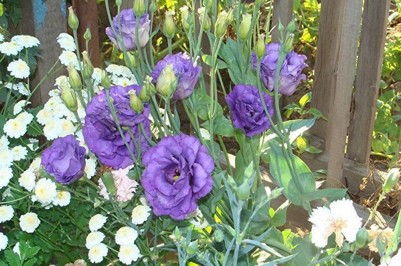 Цветы в саду. правила создания ландшафтных композиций. какие растения выбрать для цветника.